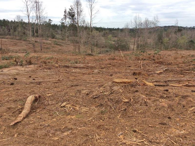 Mayberry Gulley Rd Tract : Dozier : Crenshaw County : Alabama