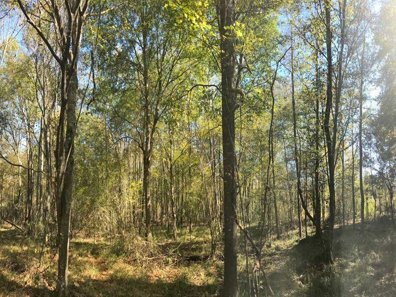 Ancient Oak Farms : Greenville : Butler County : Alabama