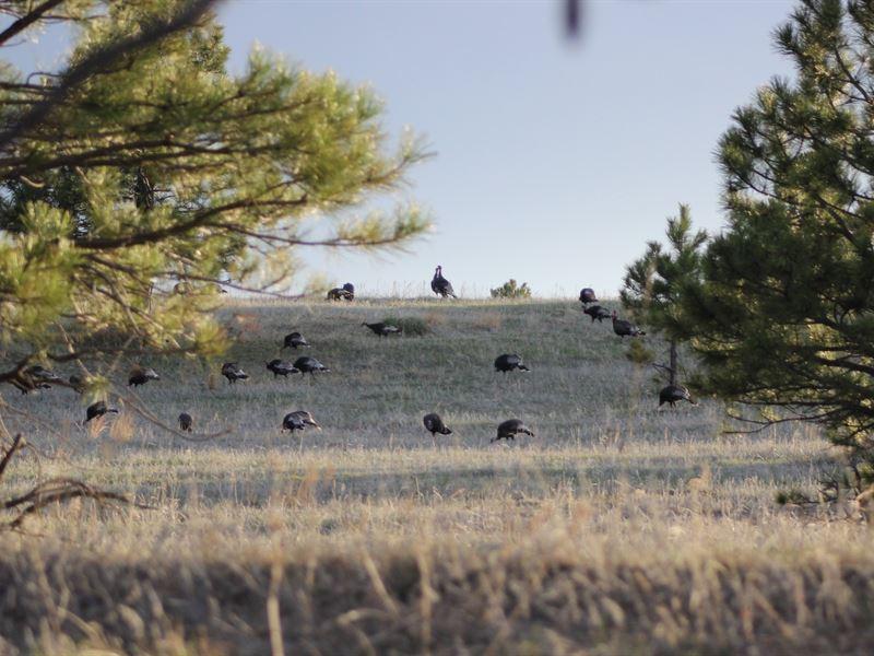 Squaw Creek Springs Tract 1 : Crawford : Dawes County : Nebraska