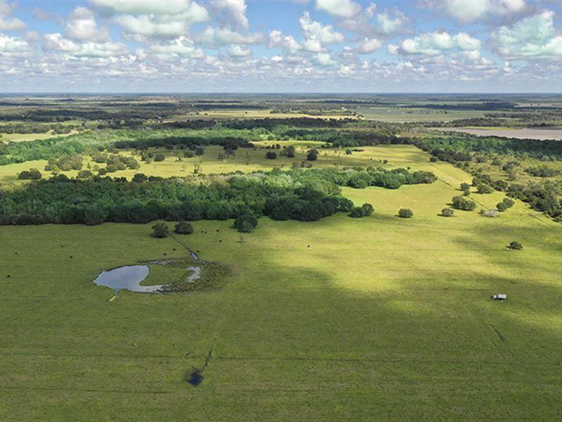 Clay Gully Farm & Ranch : Myakka City : Manatee County : Florida