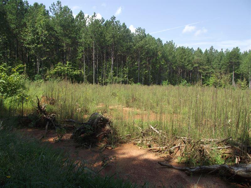 Virginia Country Estates Lot 1 : Kenbridge : Lunenburg County : Virginia