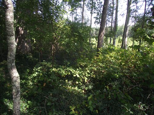 Virginia Country Estates Lot 2 : Kenbridge : Lunenburg County : Virginia
