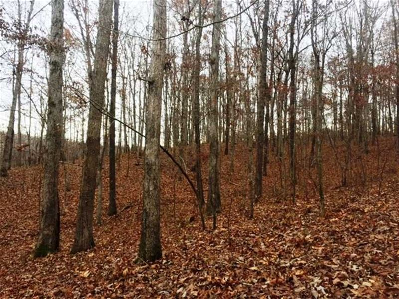 Piney Grove 120 Acres : Tuscumbia : Colbert County : Alabama