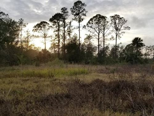 Equestrian Country Home Retreat For : North Fort Myers : Lee County : Florida
