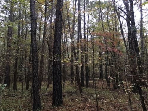 28 Acres In Holmes County On Bowlin : Durant : Holmes County : Mississippi