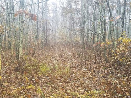 46 Acres Wooded Hunting Land Cove : Bastian : Bland County : Virginia