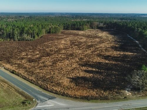 Tree Farm With Multiple Homesites : Swansea : Lexington County : South Carolina