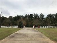 Cattle Horse Farm : Crawfordville : Taliaferro County : Georgia