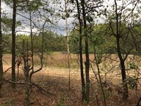 South Carolina Farm And Timberland : Bennettsville : Marlboro County : South Carolina
