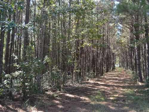 3.22 Acre Land For Sale North Pike : McComb : Pike County : Mississippi