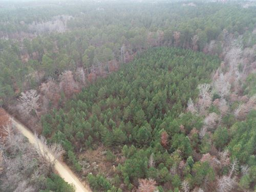 Young Planted Pine Timber Parcels : Chidester : Ouachita County : Arkansas