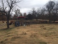 Cattle Farm Randolph County : Pocahontas : Randolph County : Arkansas