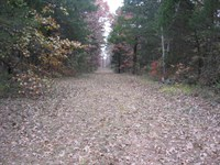 Missouri Ozark Hunting Property : Marquand : Bollinger County : Missouri