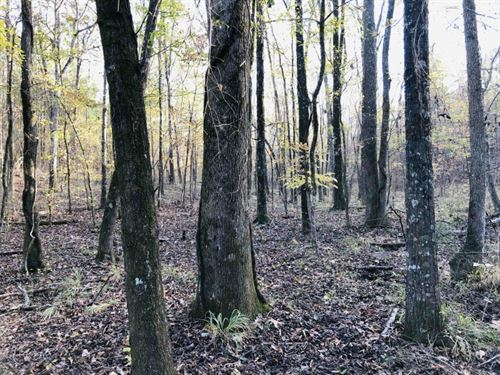Hunting & Timberland With Hardw : Crawfordville : Taliaferro County : Georgia