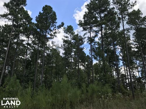 Edgefield Timber And Hunting Land : Trenton : Edgefield County : South Carolina