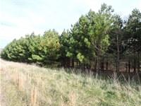 Subdivision Lots Pasture Trees : Compton : Newton County : Arkansas