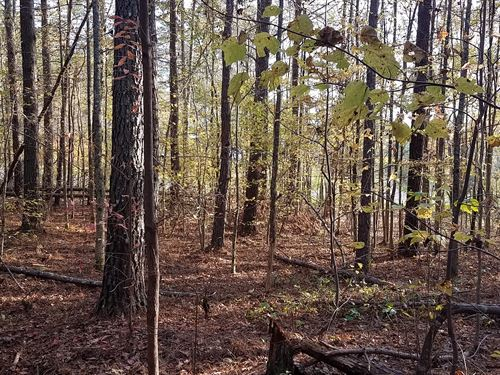 Wooded 17.5+/- Acres : Heflin : Cleburne County : Alabama