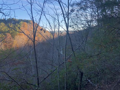 33.448 +/- Wooded Acres, Bartow Co : Rydal : Bartow County : Georgia