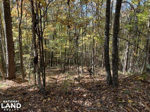 Turkey And Whitetail Honey Hole : Hazlehurst : Copiah County : Mississippi