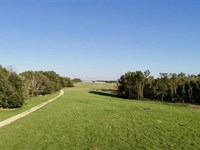 Beautiful Working Cattle Farm : Greenville : Madison County : Florida