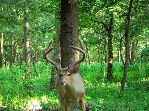 Tri County Hunting Club, Share : Fitler : Issaquena County : Mississippi