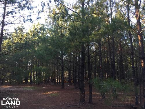 Springvale Road Recreation And Hunt : Lugoff : Kershaw County : South Carolina
