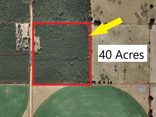 40 Acres, Chiefland, Florida Levy : Chiefland : Levy County : Florida