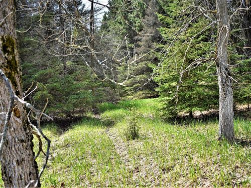 Wooded Lot Atlanta Deeded Access to : Atlanta : Montmorency County : Michigan