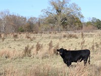 Cattle Farm With 5,000 Sf House : Elberton : Elbert County : Georgia