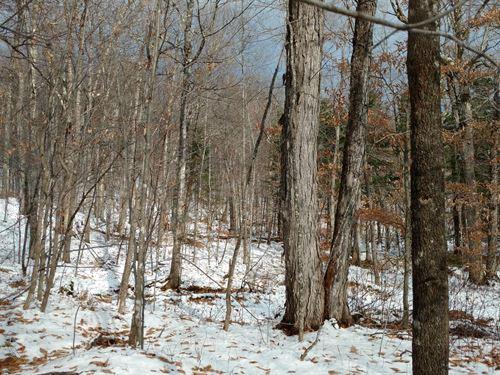 Derby Brook Forest : Lewis : Essex County : New York