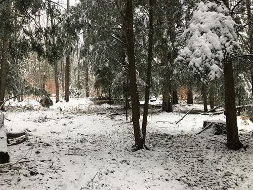 Cold Brook Hunting Grounds : Salisbury : Herkimer County : New York