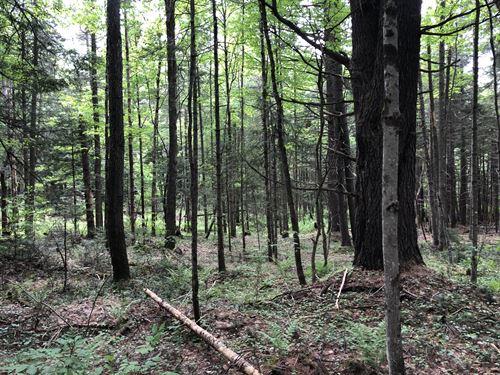 Camp Spot Near Cold Brook : Salisbury : Herkimer County : New York