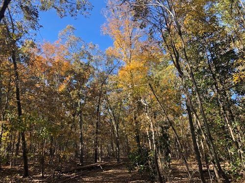 27 Ac Hardwood Forest : Thomaston : Upson County : Georgia