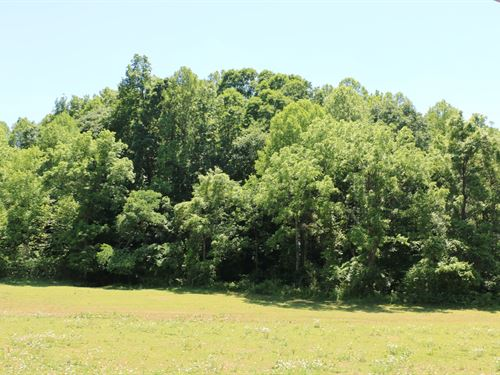 21+ Acre Investment Timber Tract : Dobson : Surry County : North Carolina