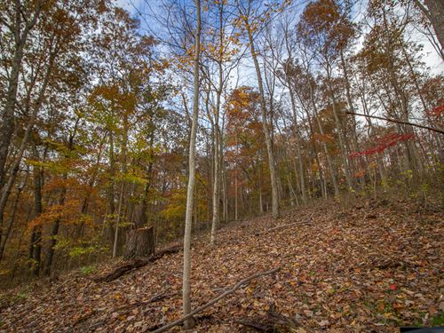 Clipner Rd, 40 Acres : Londonderry : Vinton County : Ohio