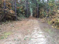 Heavily Wooded 18+ Acres 10 Minute : Nacogdoches : Nacogdoches County : Texas
