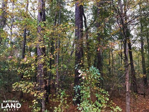 Williston Timber Investment : Williston : Barnwell County : South Carolina