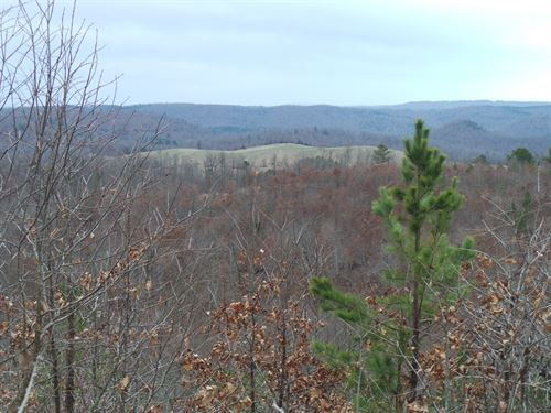 Remote And Wild 40 Acres For Sale : Flippin : Marion County : Arkansas