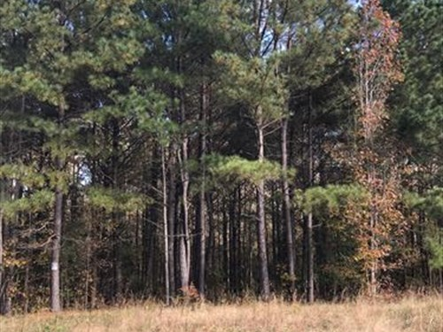 4.46Ac, With Suitable Building Site : Pauline : Spartanburg County : South Carolina