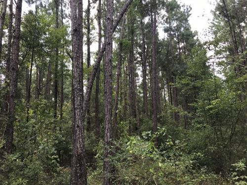 95 Acres In Pike County, MS : Summit : Pike County : Mississippi
