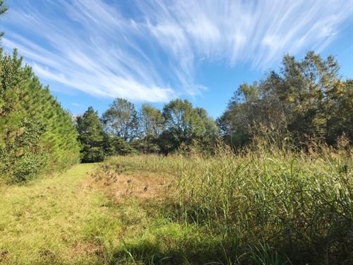 215 Acres Farm & Timberland : Lumberton : Lamar County : Mississippi