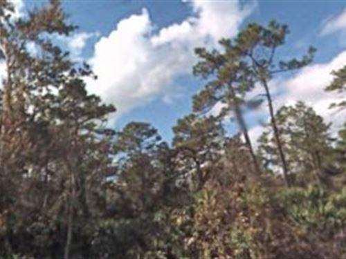 Volusia Co, Fl 1.25 Ac 44,800 Neg : New Smyrna Beach : Volusia County : Florida