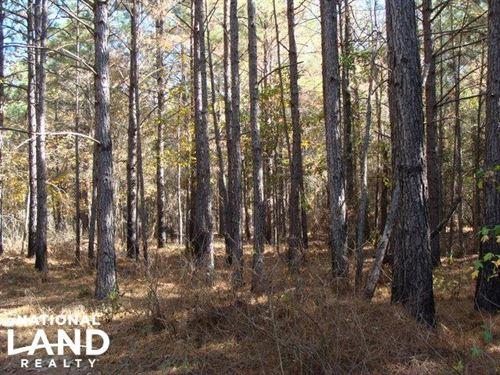 64 Acres, Timber & Hunting Land : Amity : Clark County : Arkansas