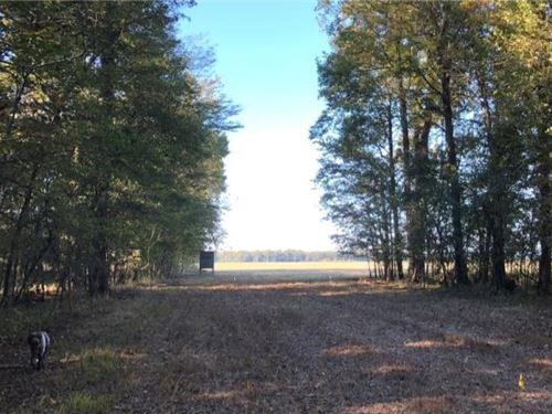274.9 Acres In Sharkey County In Ro : Rolling Fork : Sharkey County : Mississippi