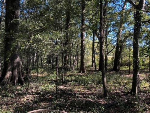 41.9 Acres In Sharkey County In Rol : Rolling Fork : Sharkey County : Mississippi