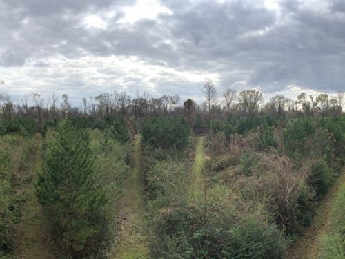 116 Acres In Holmes County In Duran : Durant : Holmes County : Mississippi