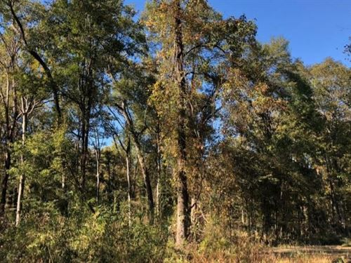 354.6 Acres In Issaquena County In : Mayersville : Issaquena County : Mississippi