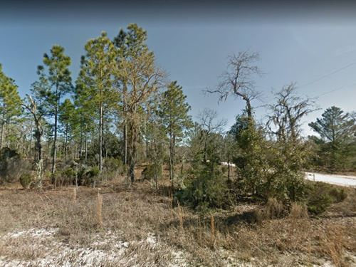Levy County, Fl $25,000 : Williston : Levy County : Florida
