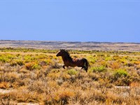 Ranch Bordering Blm & State Land : Rawlins : Carbon County : Wyoming