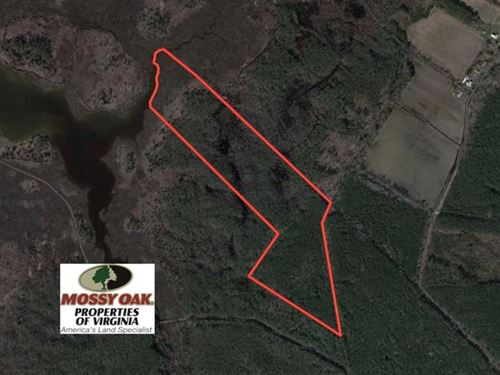 20 Acres of Hunting Land For Sale : Onancock : Accomack County : Virginia